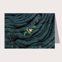 Faltkarte «Neues Erwachen»