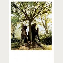 Bildbeschreibung - Der Baum