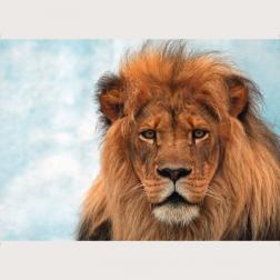 Bildbeschreibung - Löwe