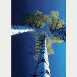 Bildbeschreibung - Blick nach oben