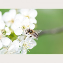 Bildbeschreibung - Blütenzauber