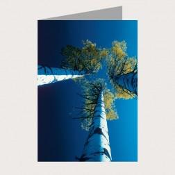 Faltkarte «Blick nach oben»