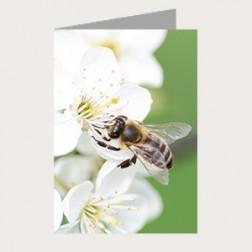 Faltkarte «Blütenzauber»
