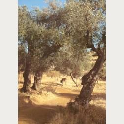 Bildbeschreibung - Weg nach Galiläa