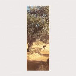 Lesezeichen «Weg in Galiläa»